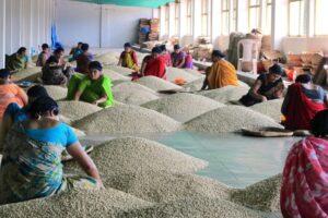 Sorteren Monsoon Malabar koffie